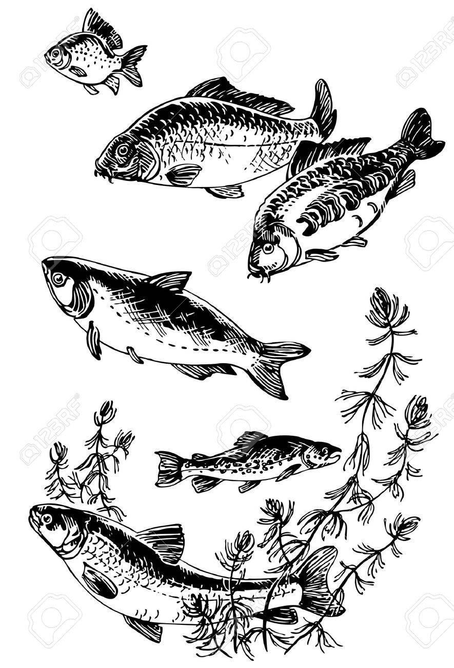 10403042-Fishes-Stock-Vector-carp-fishin