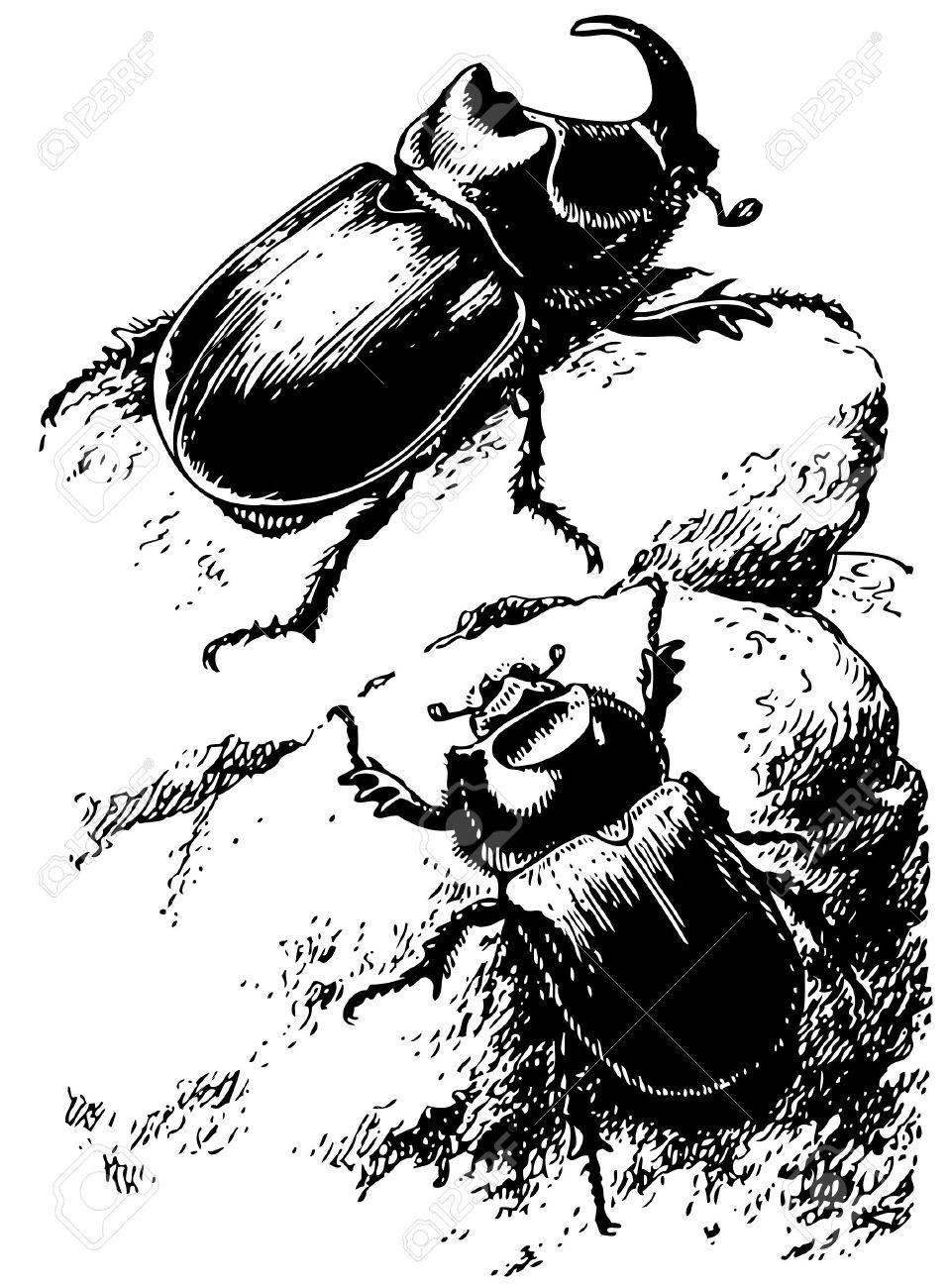 Rhinoceros beetle Stock Vector - 10402981