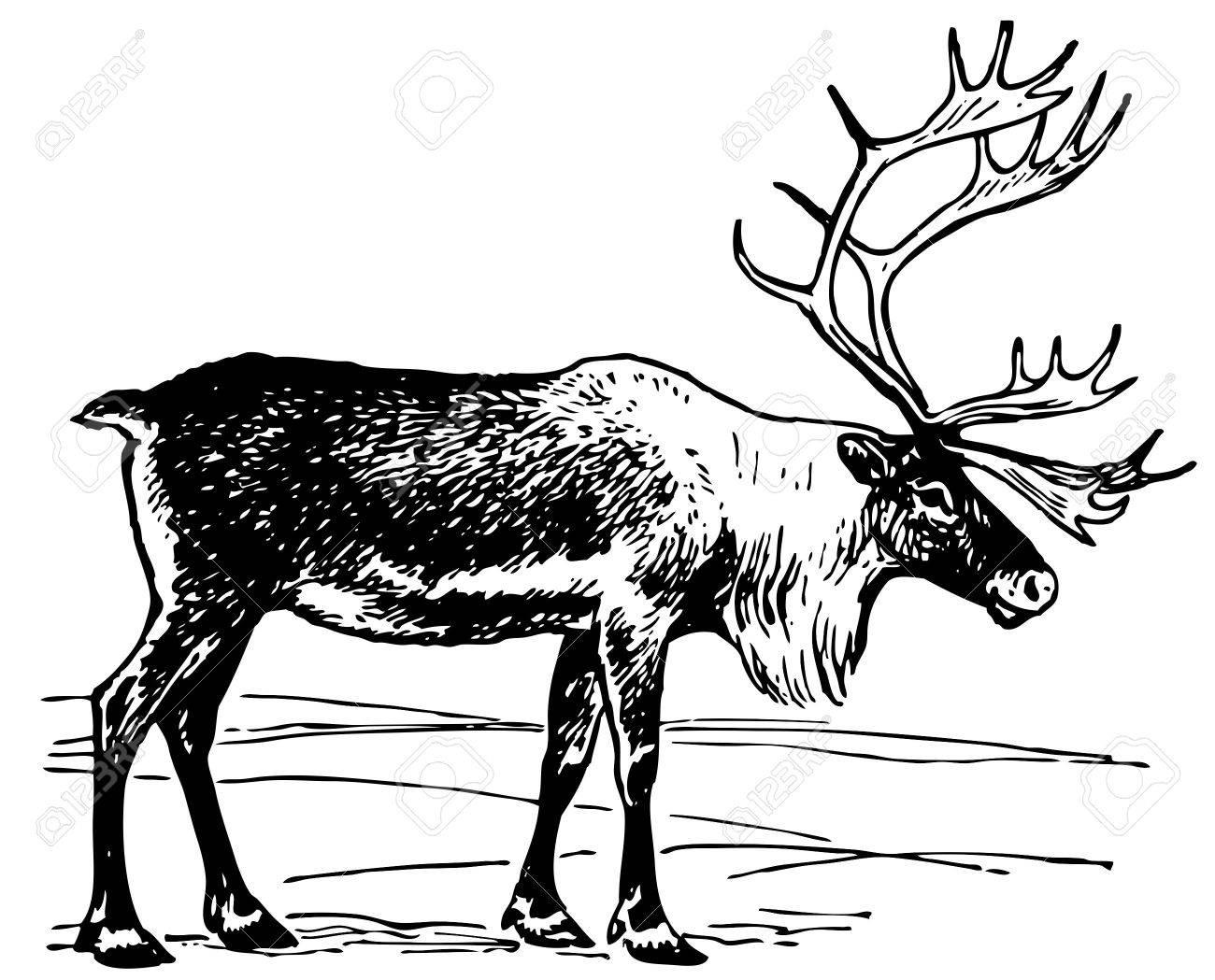 Reindeer - 10402613