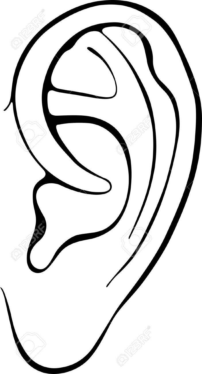 Human ear isolat   Ear Clip Art Images