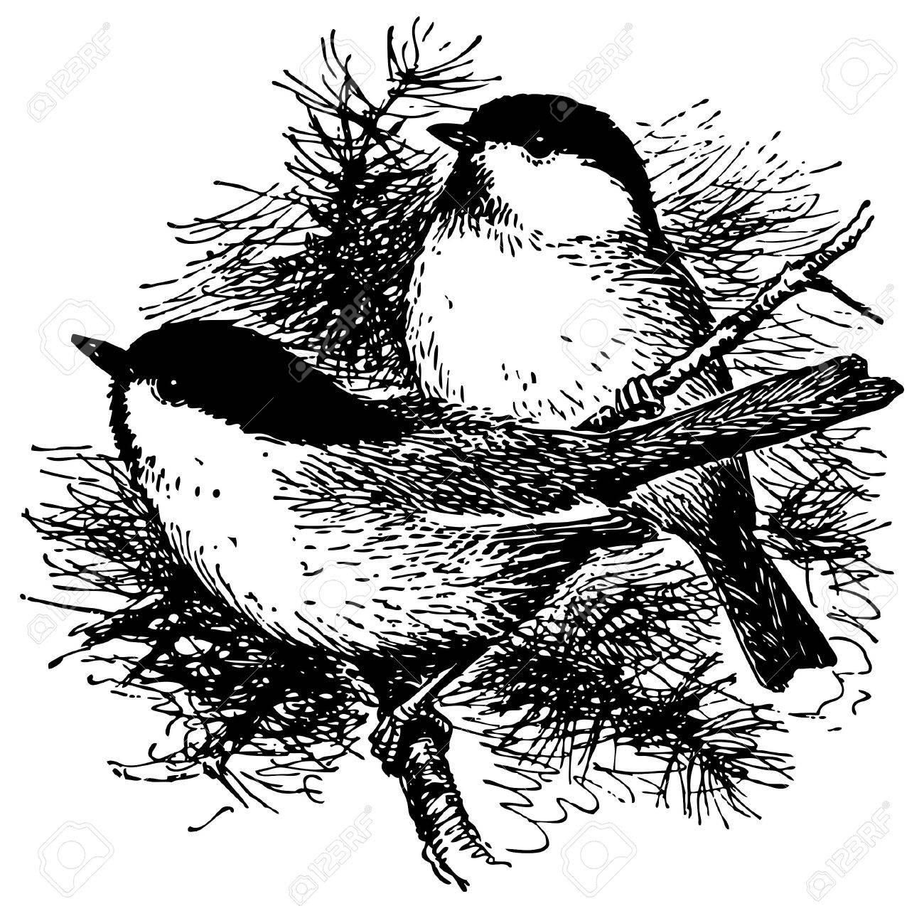 Bird Black-capped Chickadee Stock Vector - 12486160