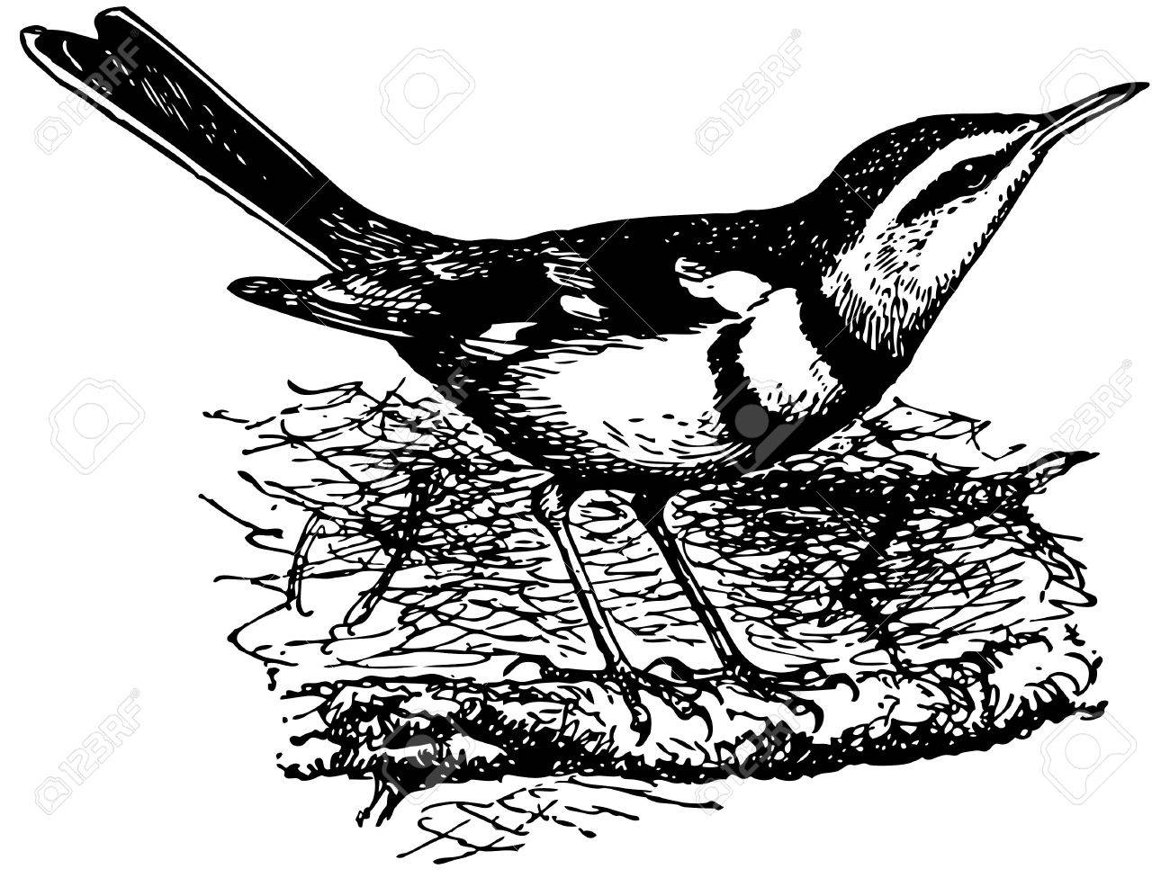 Bird Forest Wagtail Stock Vector - 12486017