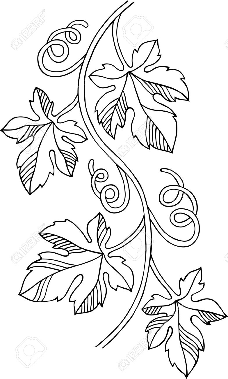 Grape Design Element Royalty Free Cliparts Vectors And Stock Illustration Image 13450320