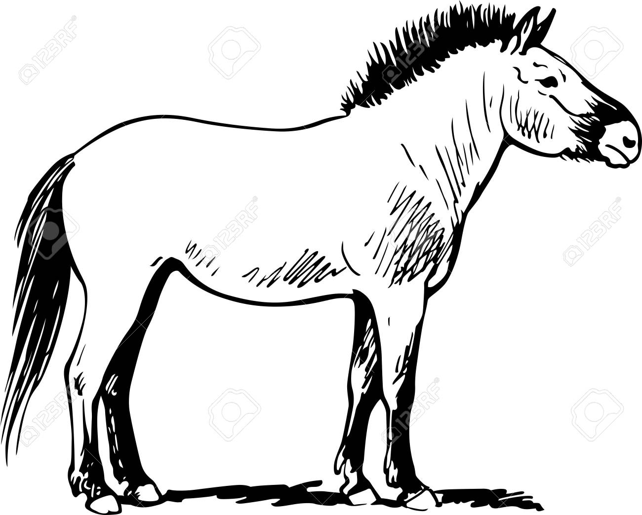 Horse standing on the ground Stock Vector - 15884256