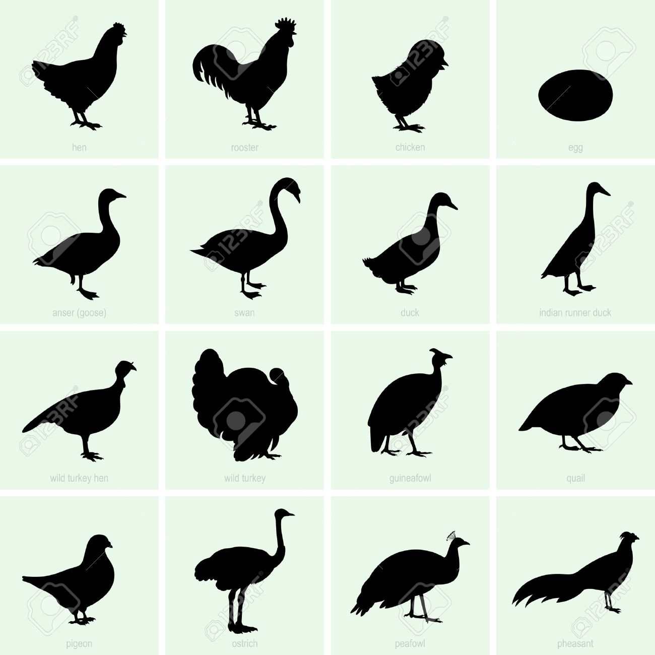 Set of poultry icons - 22866380