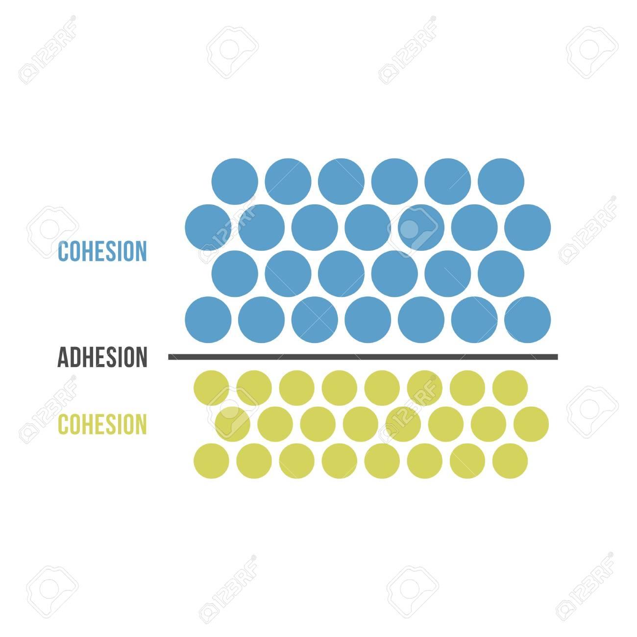 Cohesion and Adhesion - 105713812