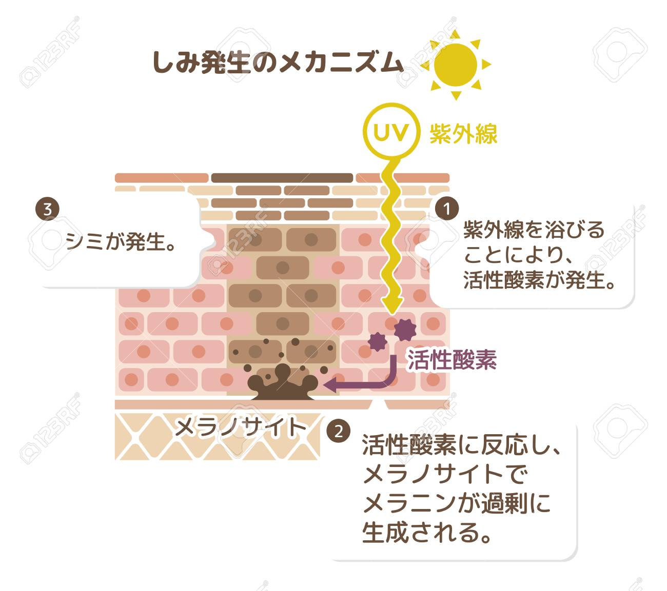 Mechanism of skin pigmentation - 99140254