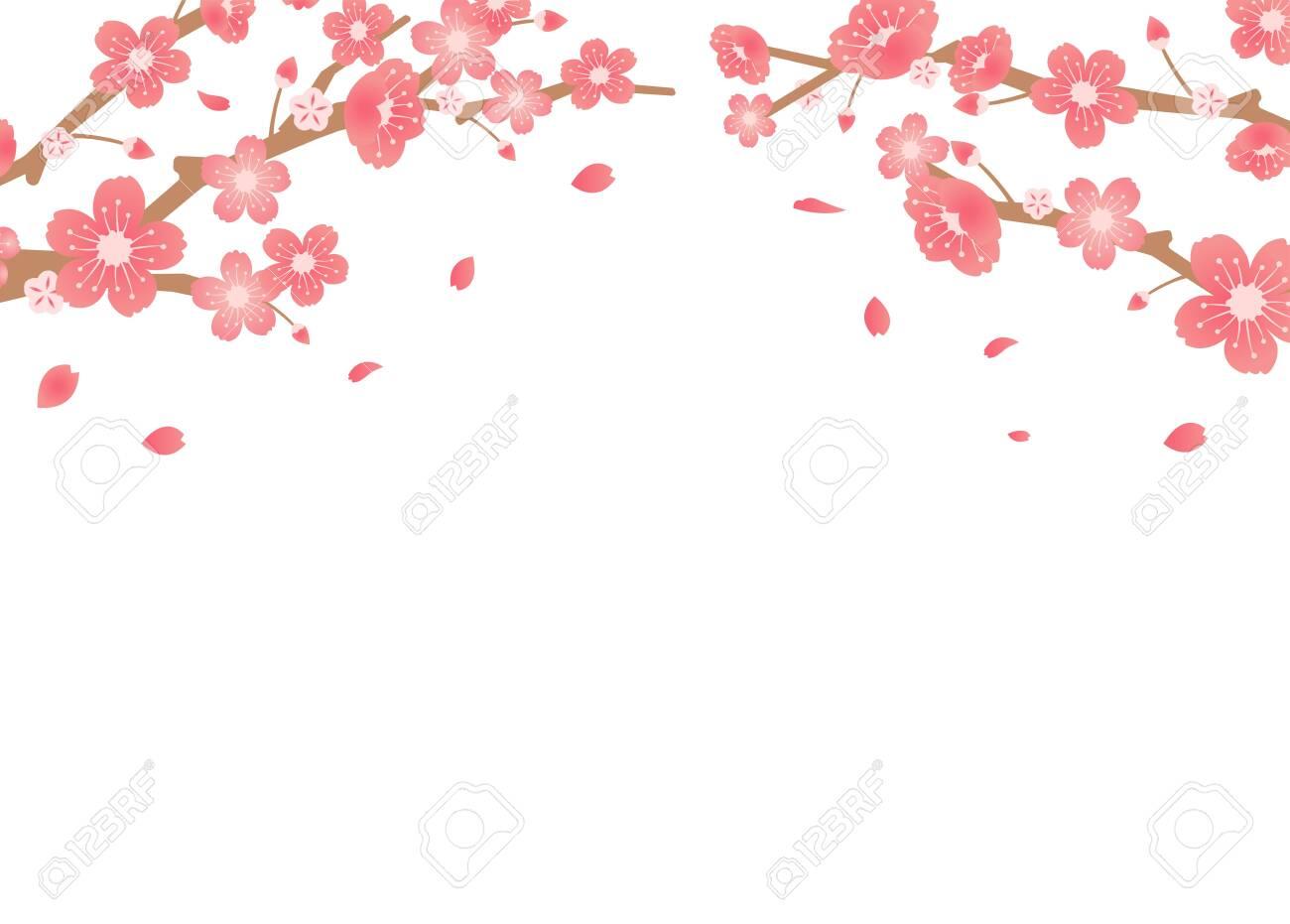 Cherry blossoms background illustration ( spring season theme ) - 141548726