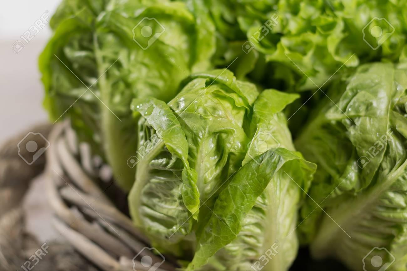 variété de feuilles de salade verte de romarin frais - nourriture