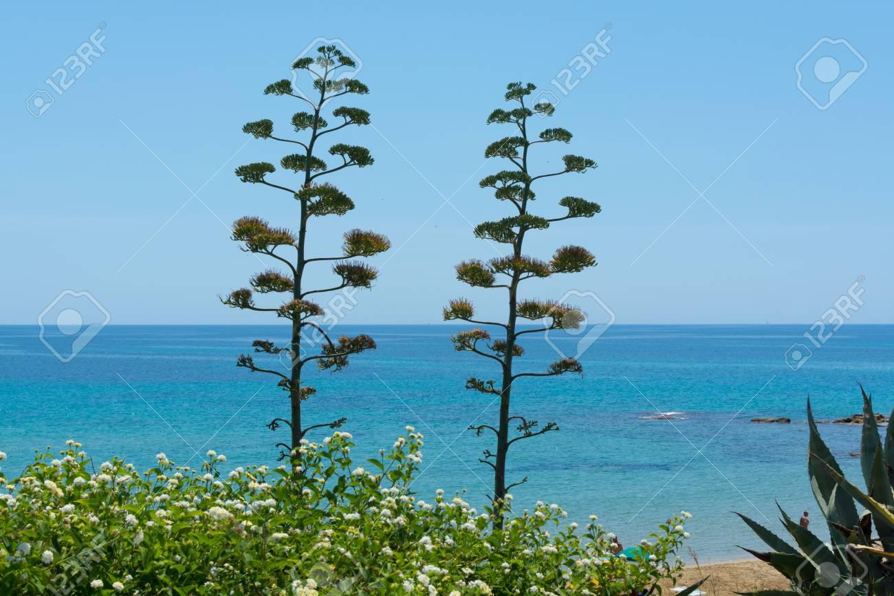 Fleur D Agave Plante Sur Une Ile Tropicale Avec De L Eau De Mer Bleu