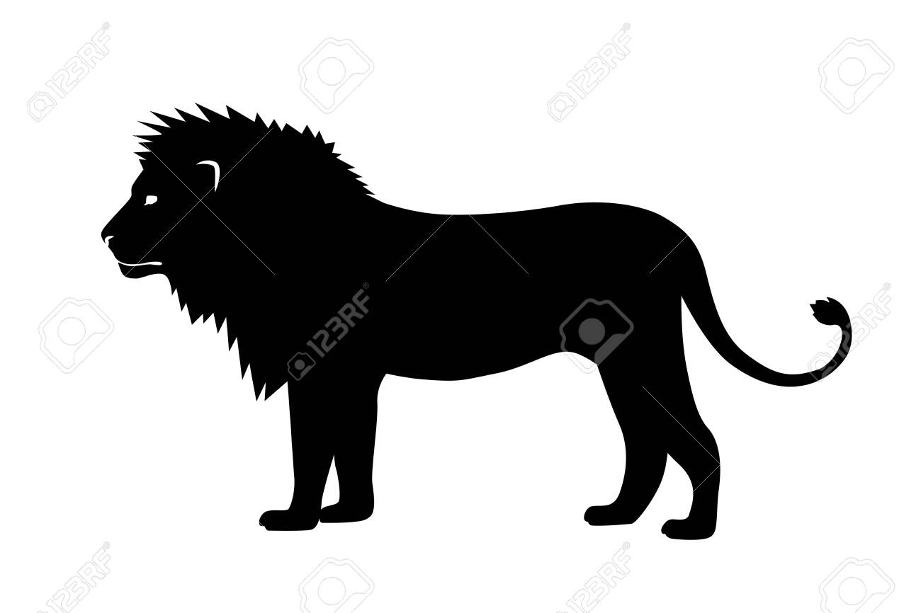 Vector illustration of a black silhouette lion on white - 142695345