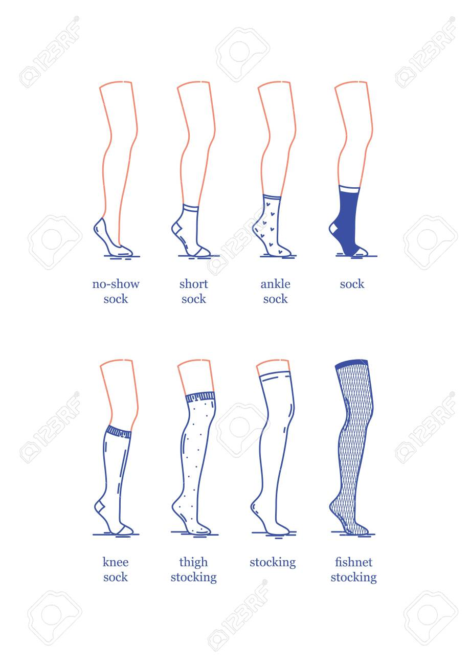 Vector image. A set of female socks and stockings of different lengths. Socks and stockings on the leg of a dummy. Flat design - 148200329