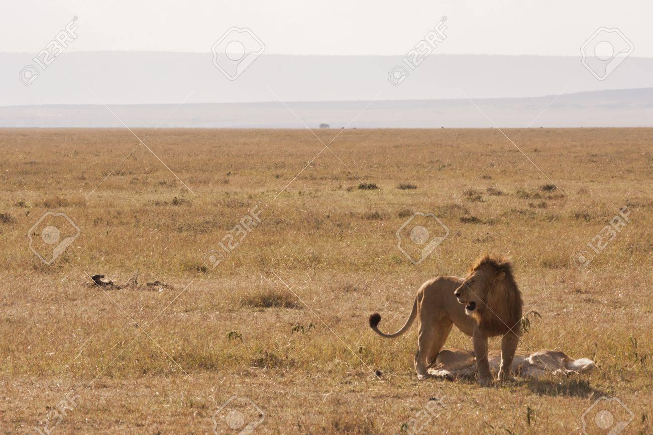 Saving The Lion Foundation