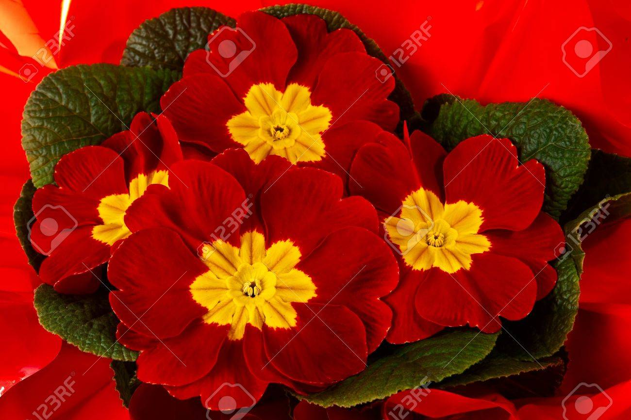 Bunch Of Yellow And Red Spring Flowers Stock Photo Picture And