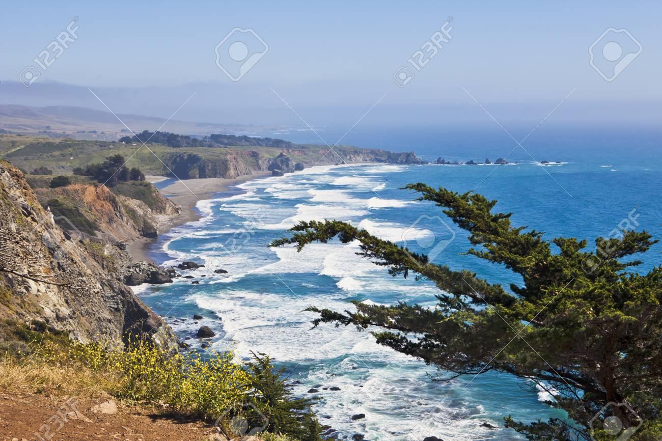 Lush juniper perches precariously on a steep cliff along California Stock Photo - 10628032
