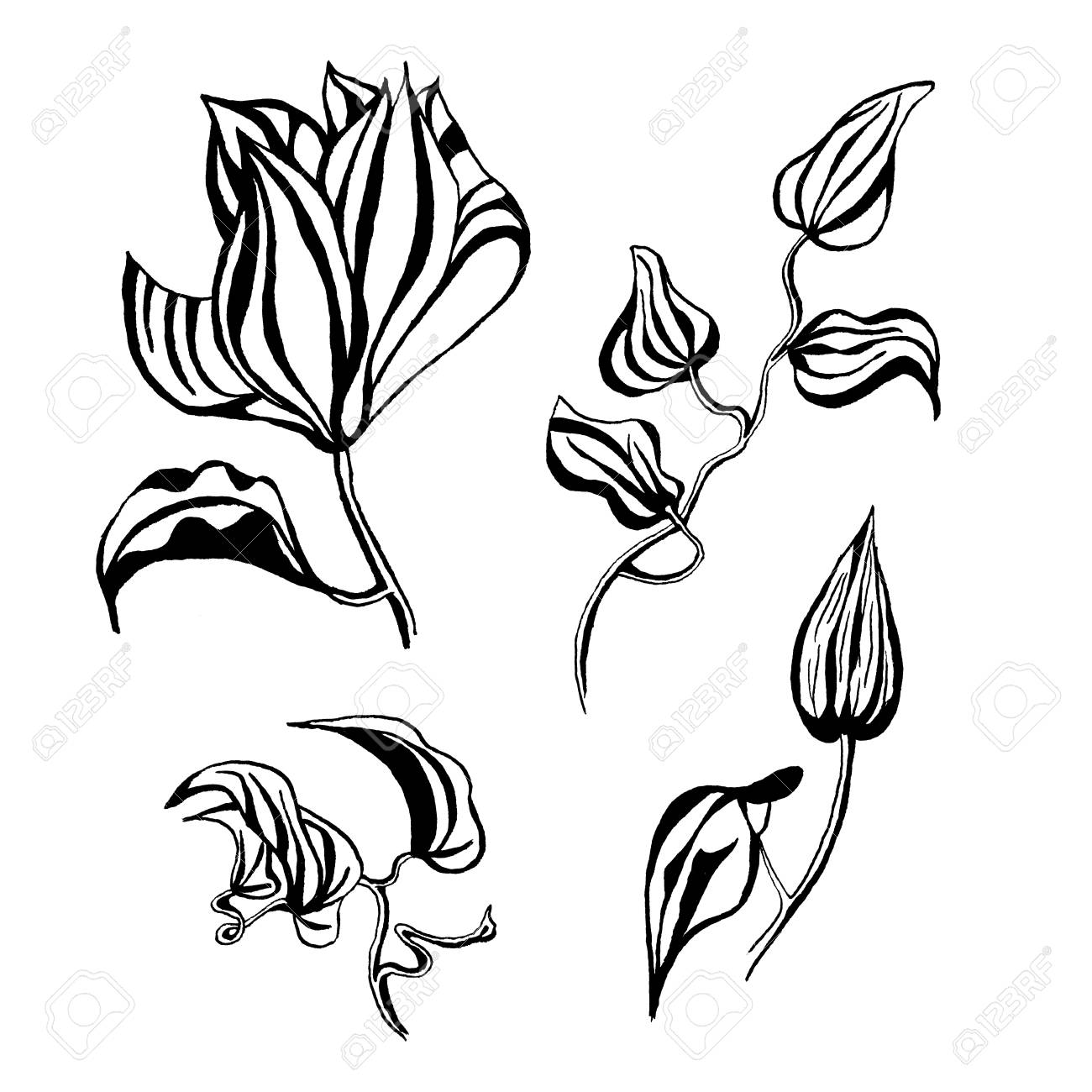 Graphic Clematis Flower Set Isolated On White Background Hand Drawn Ink Botanical Black And White Monochrome Illustration For Wedding Printing