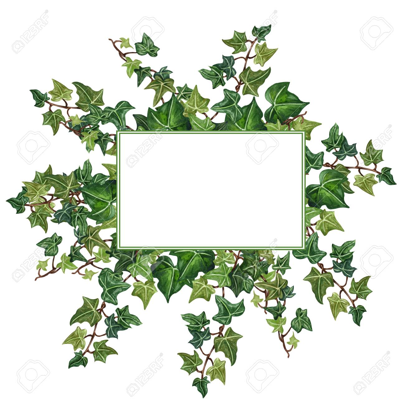 Watercolor Botanical Ivy Illustration Floral Frame From Ivy Stock Photo Picture And Royalty Free Image Image 122321243