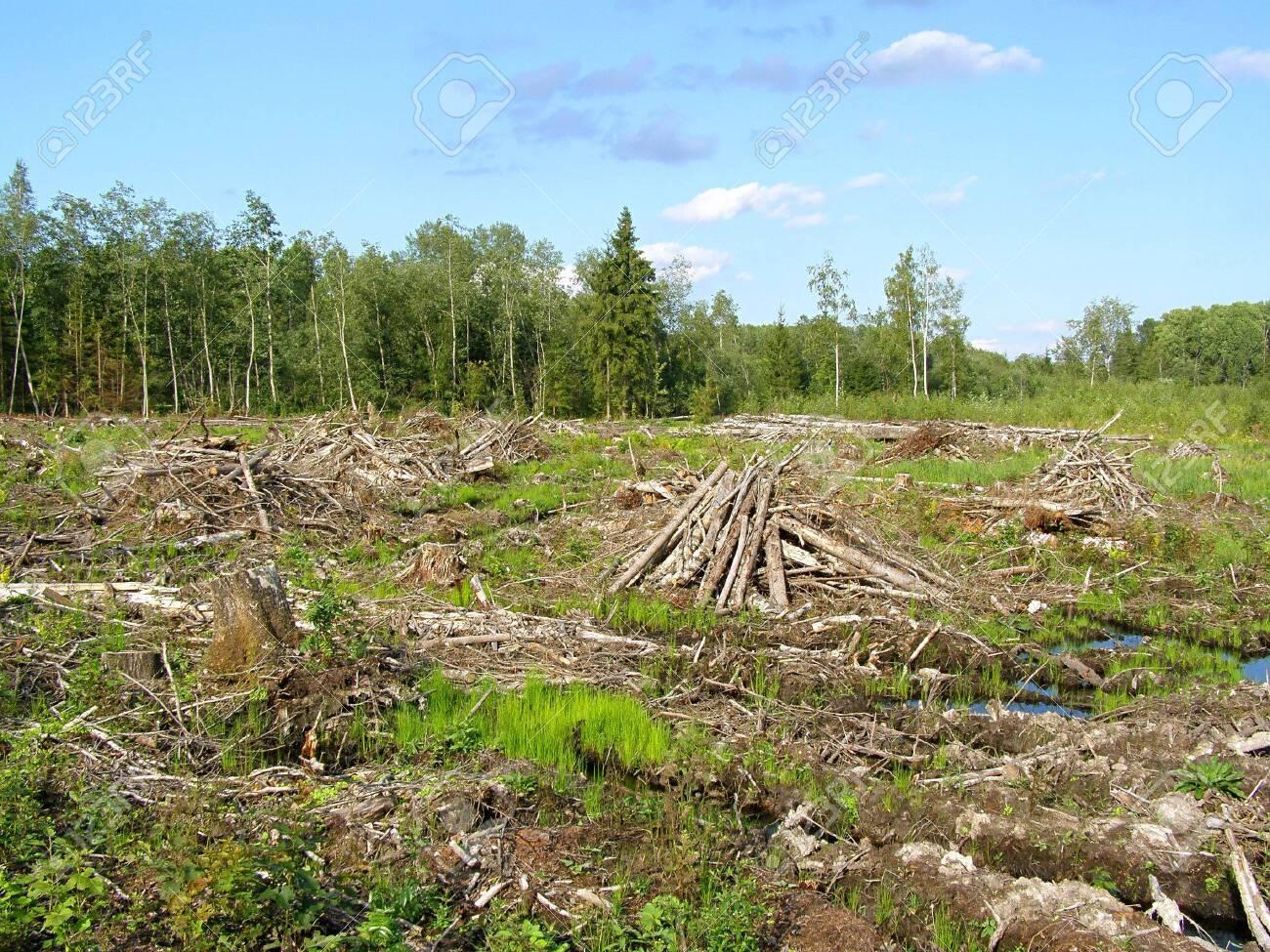 chopping wood Stock Photo - 6053284