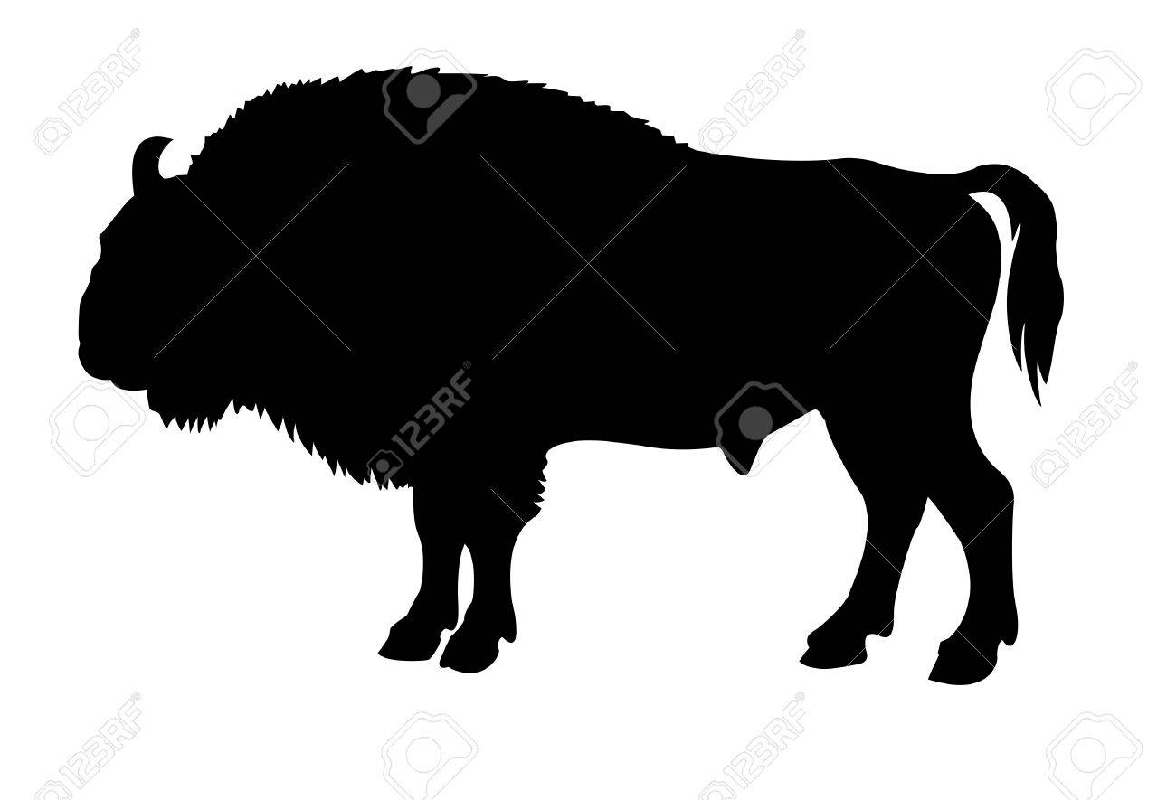 silhouette of the buffalo on white background Stock Vector - 6240558