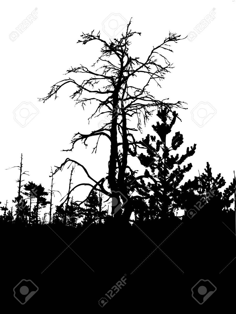 silhouette old tree isolated on white background Stock Vector - 6658093