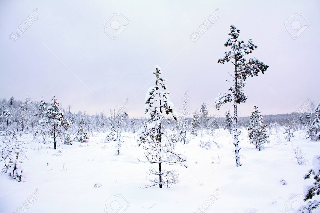 wood in snow Stock Photo - 6658091