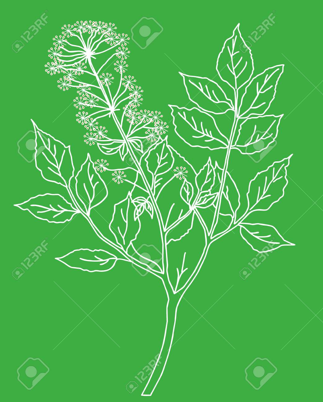 silhouette of the plant on green background Stock Vector - 7038652