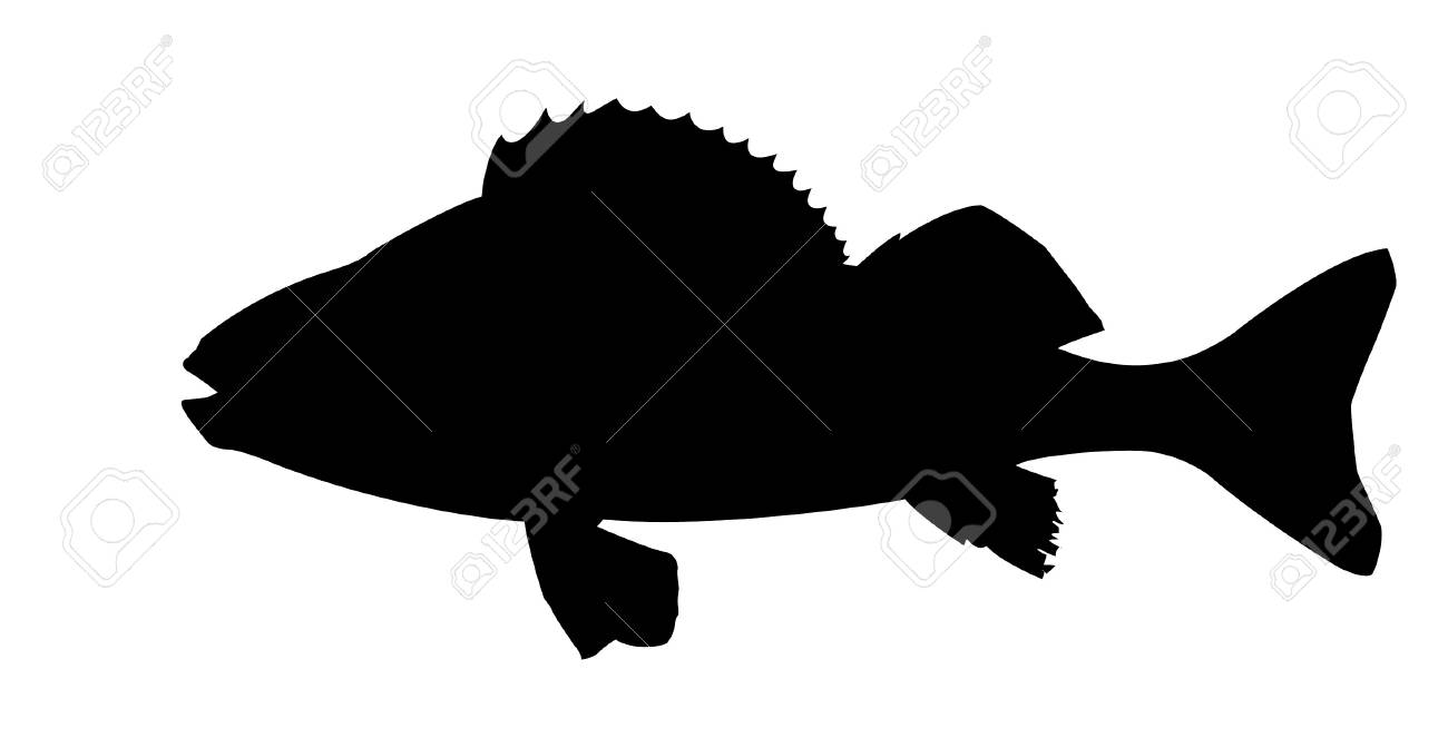 silhouette of fish on white background Stock Photo - 7656407