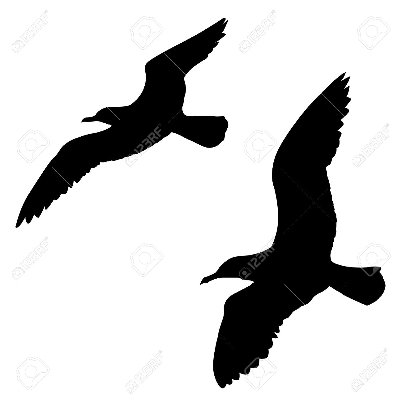 silhouette of the sea gull on white background royalty free cliparts rh 123rf com seagull vector art seagull vector free download