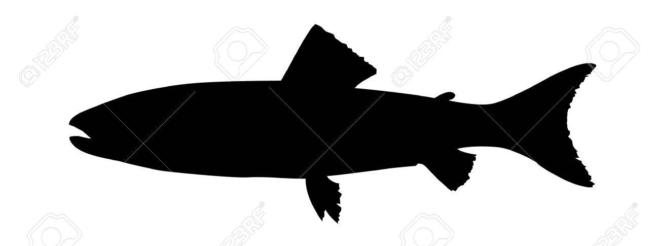 silhouette to trouts on white background Stock Vector - 7704956