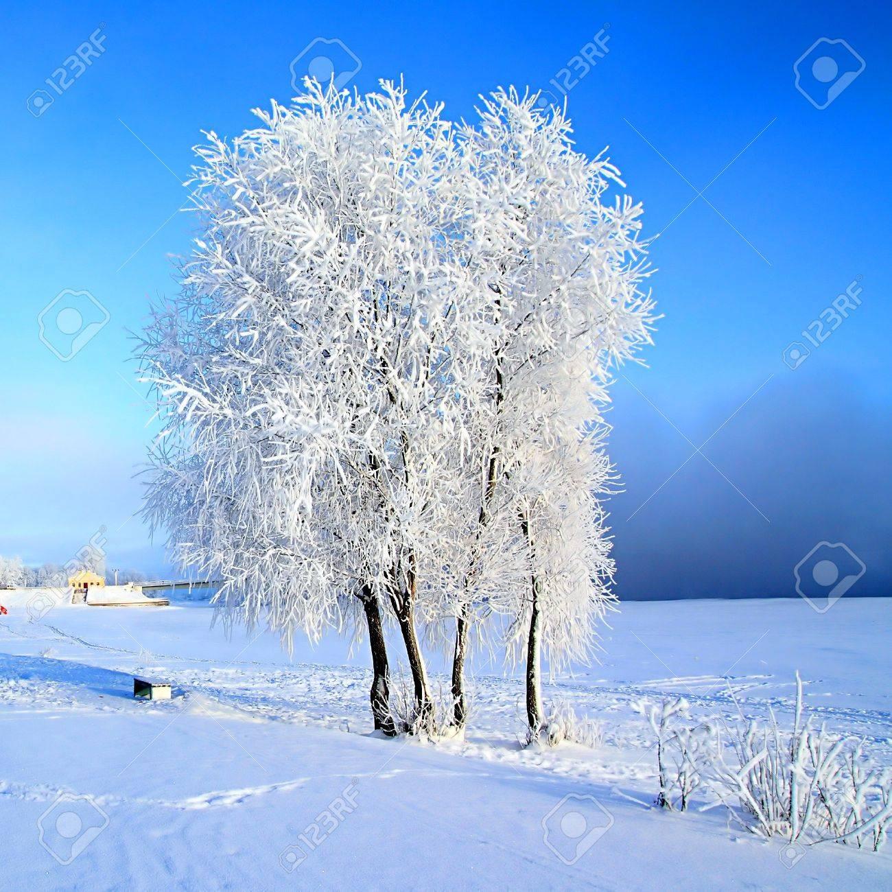 tree in snow Stock Photo - 7705227