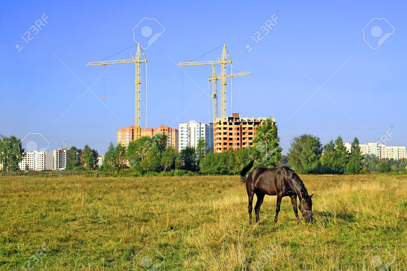 horse grazes on meadow against new building Stock Photo - 7736014