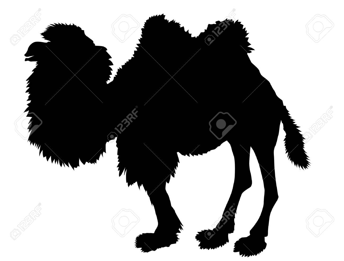 silhouette of the camel on white background Stock Vector - 7780133