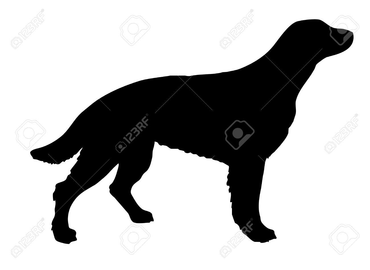 silhouette setter on white background Stock Vector - 7780058