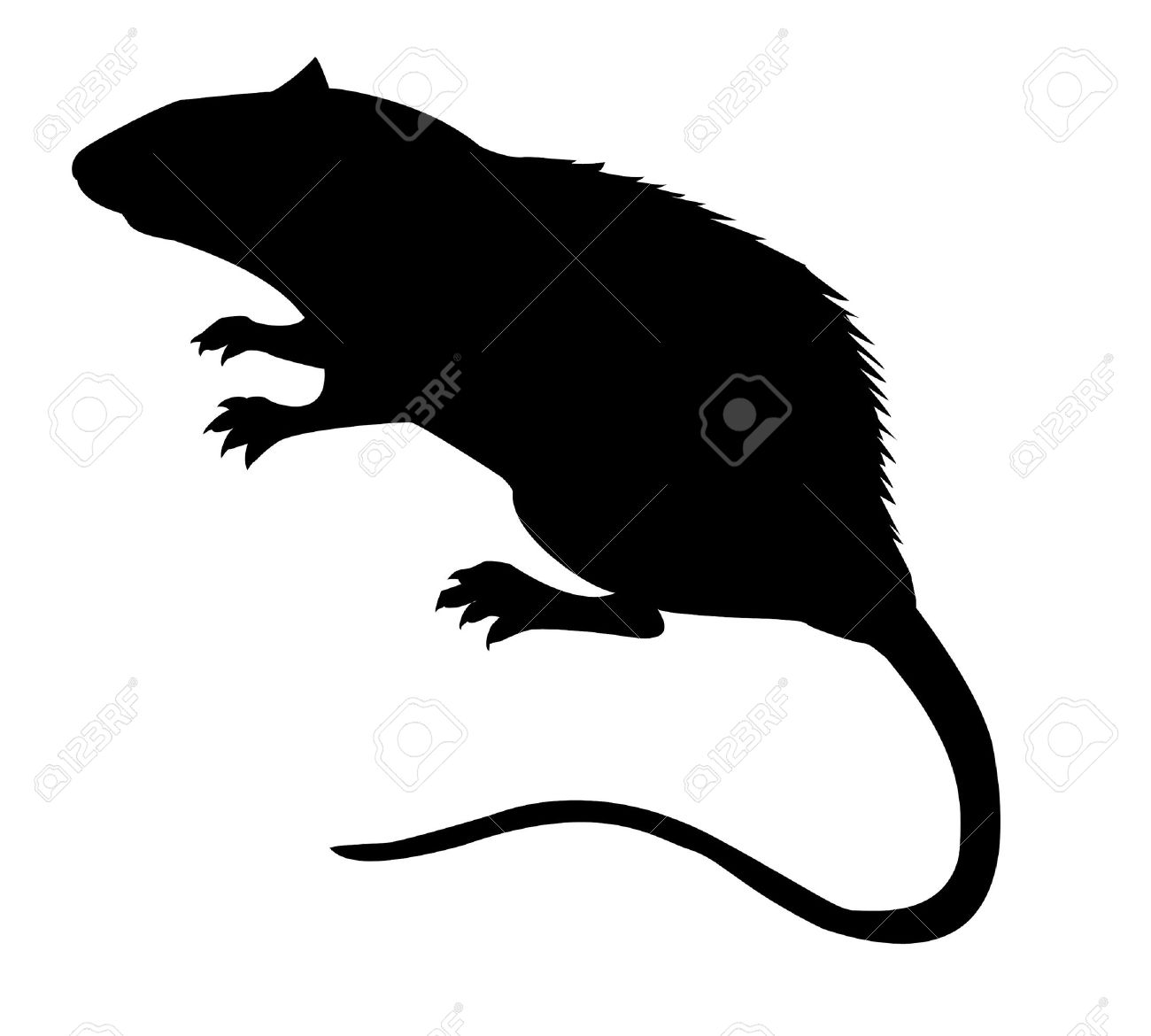 silhouette of the rat on white background Stock Vector - 7780046