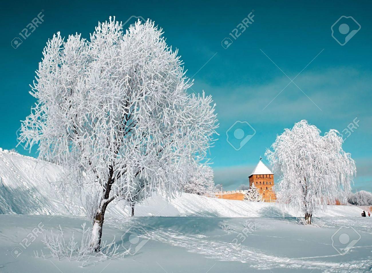 tree in snow Stock Photo - 8268156