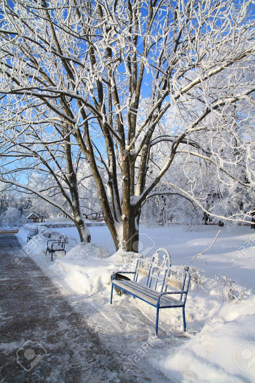 decorative bench in winter park Stock Photo - 8333425