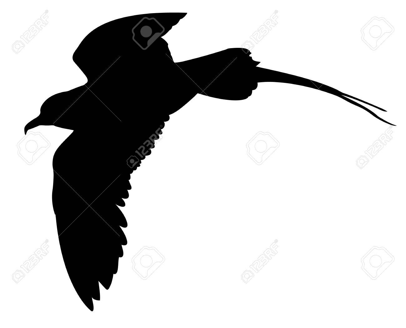 vector silhouette of the sea bird on white background Stock Vector - 8922500