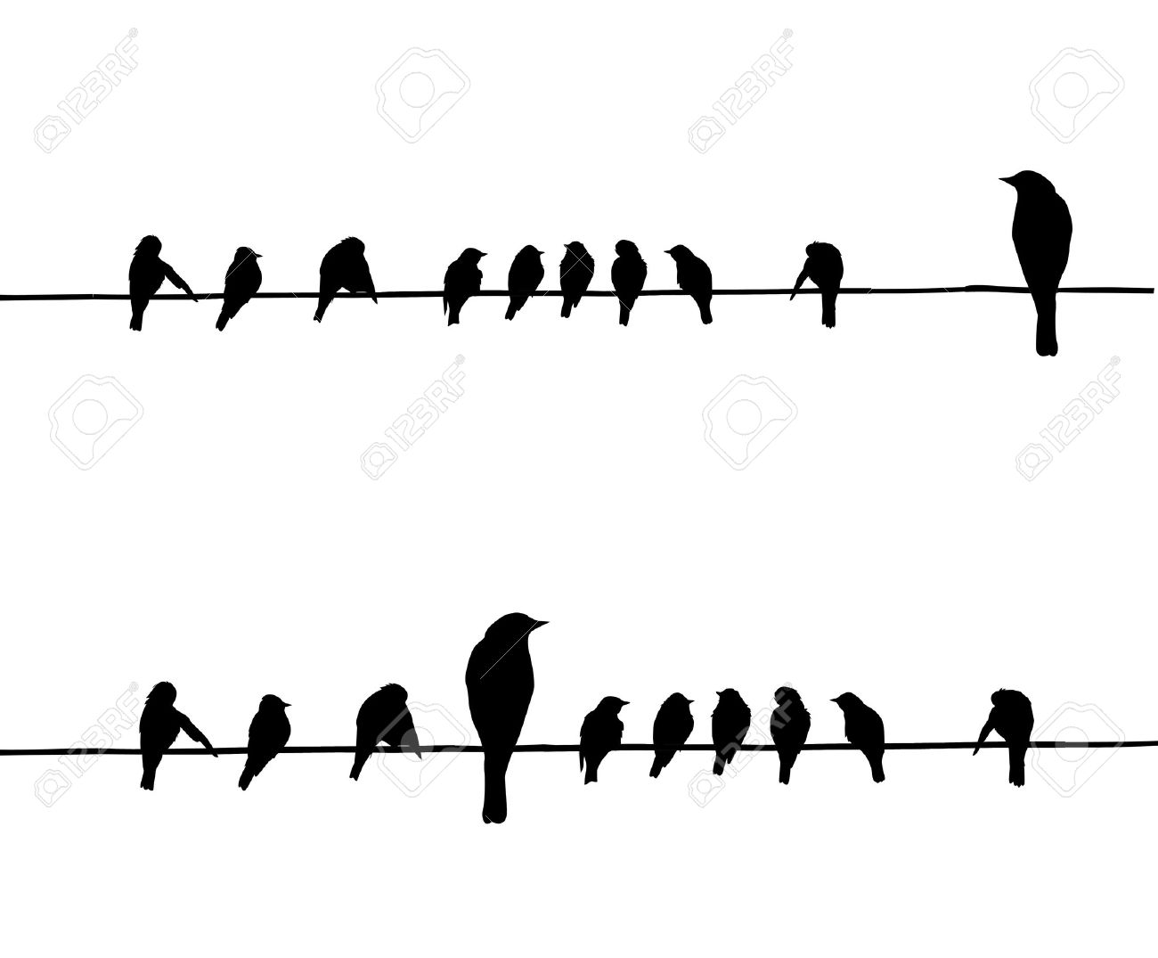 bird on a wire stock photos royalty free bird on a wire images
