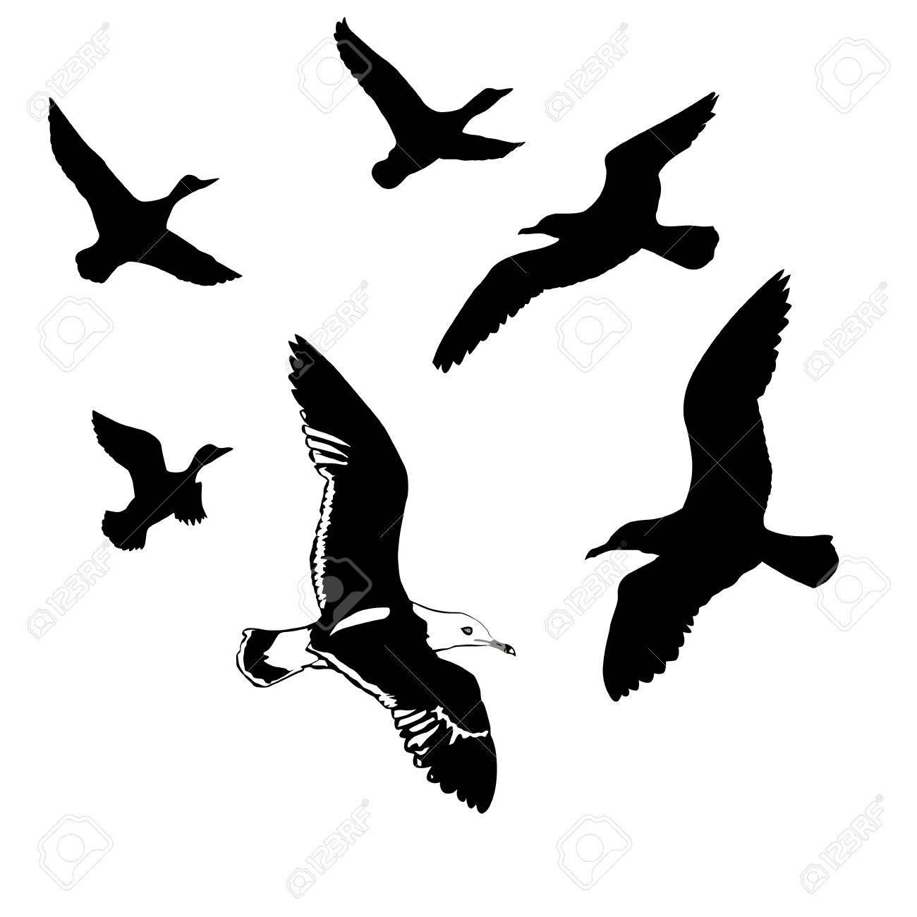 白い背景の上飛ぶ鳥シルエット