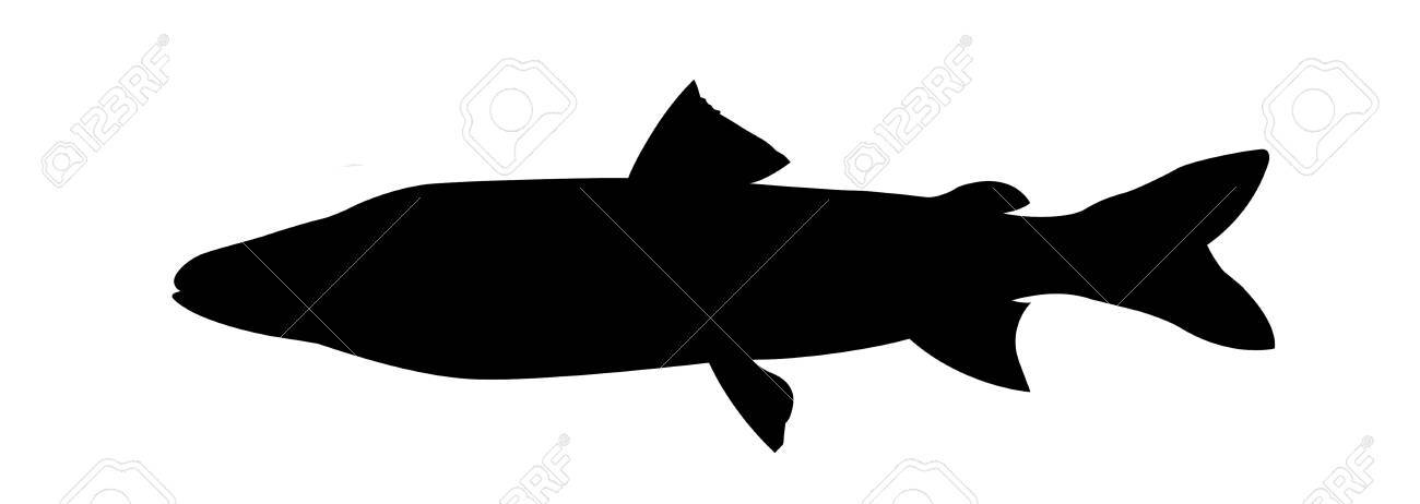 vector silhouette river salmon on white background Stock Photo - 11349897