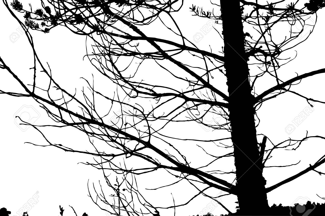 tree silhouette on white background, vector illustration Stock Vector - 12597112