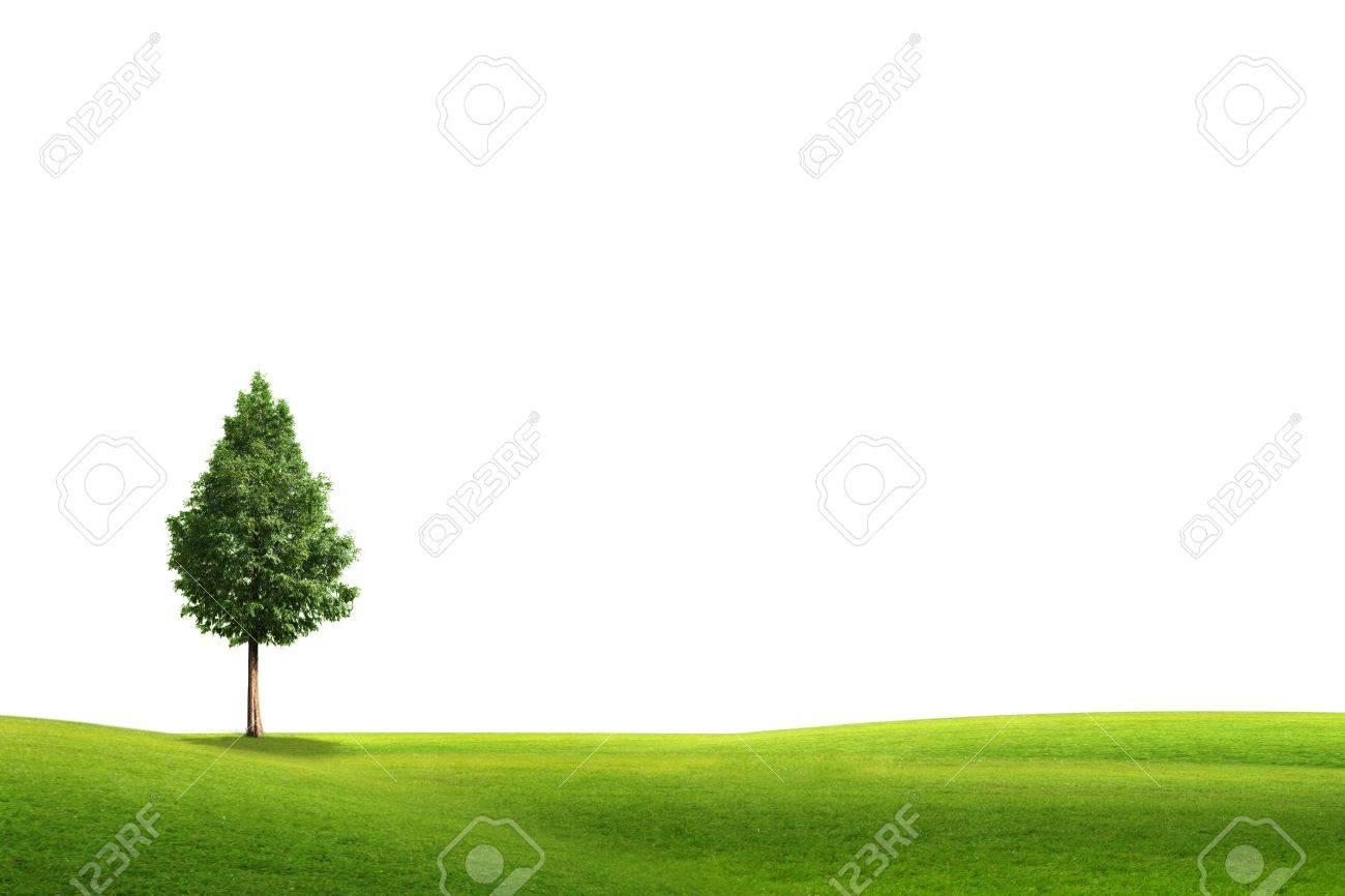 Campo fondo blanco