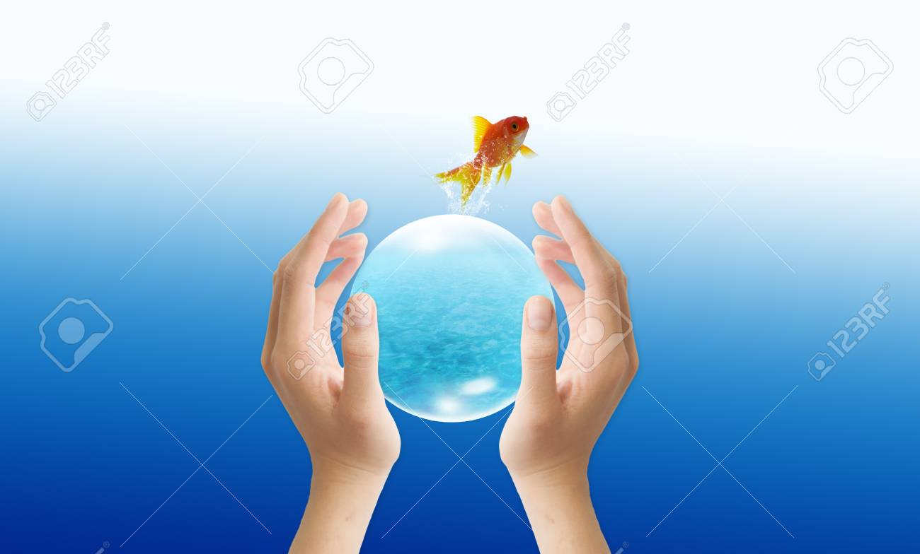 goldfish leader on white background, unique and diffrent business concept Stock Photo - 11568819