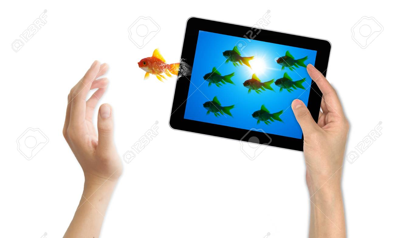 goldfish leader on white background, unique and diffrent business concept Stock Photo - 11568836