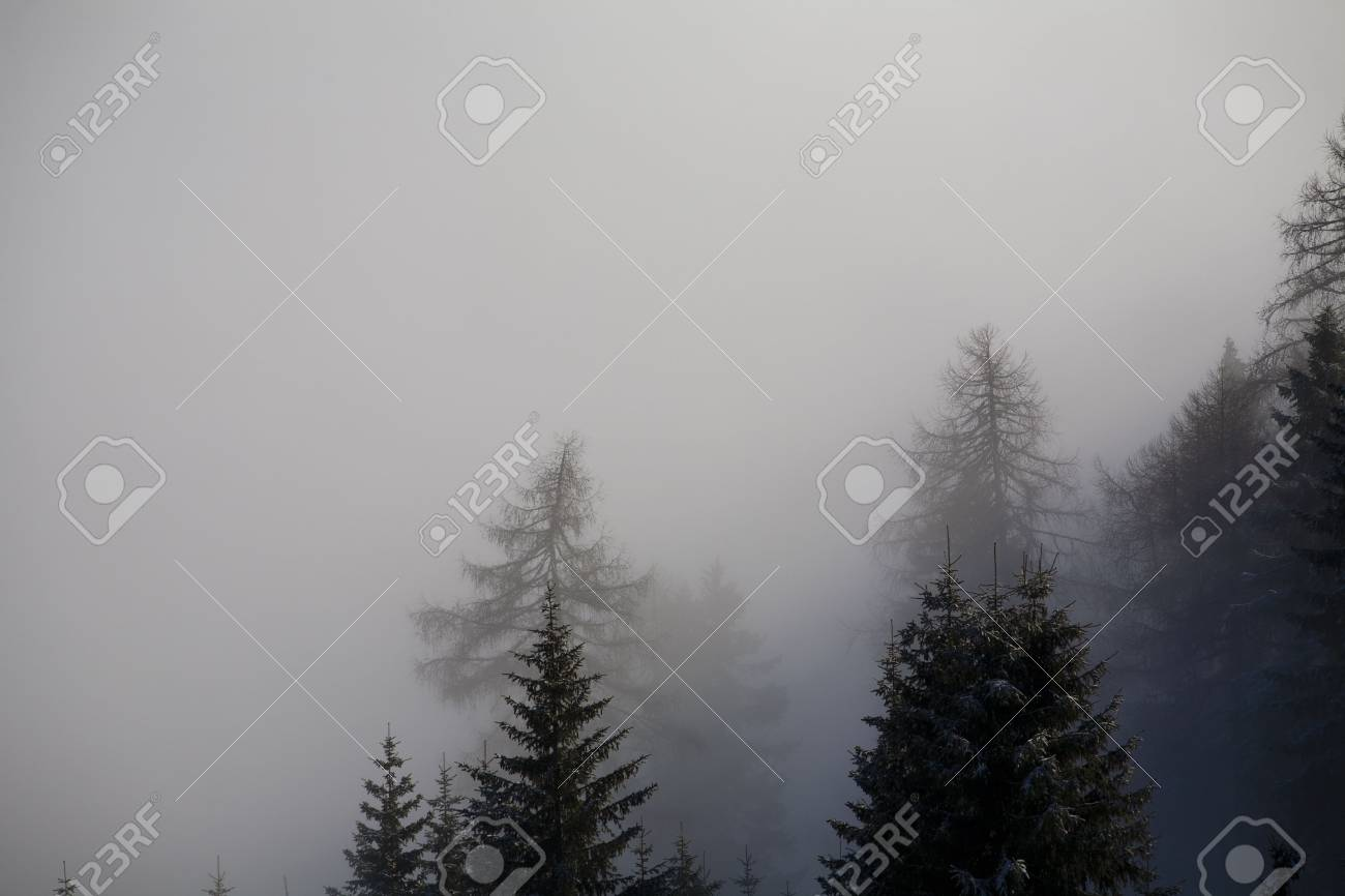 Forest in the mountains in the clouds with fog Stock Photo - 5932778