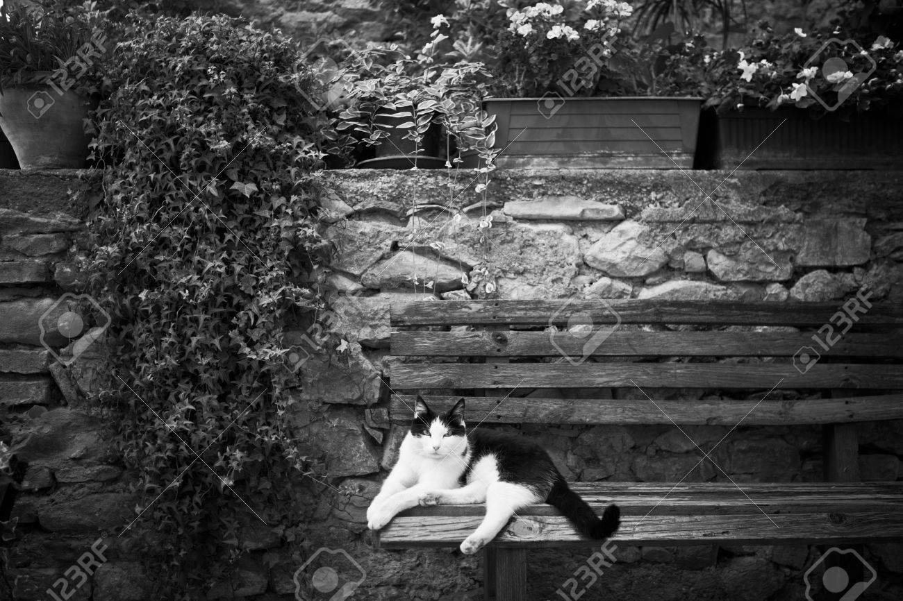 Italian cat in a garden on a bench Standard-Bild - 7402469