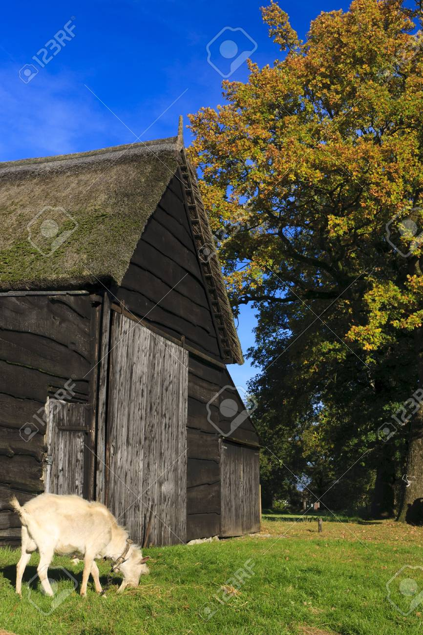 Autumn landscape with barn and goat Stock Photo - 7704199