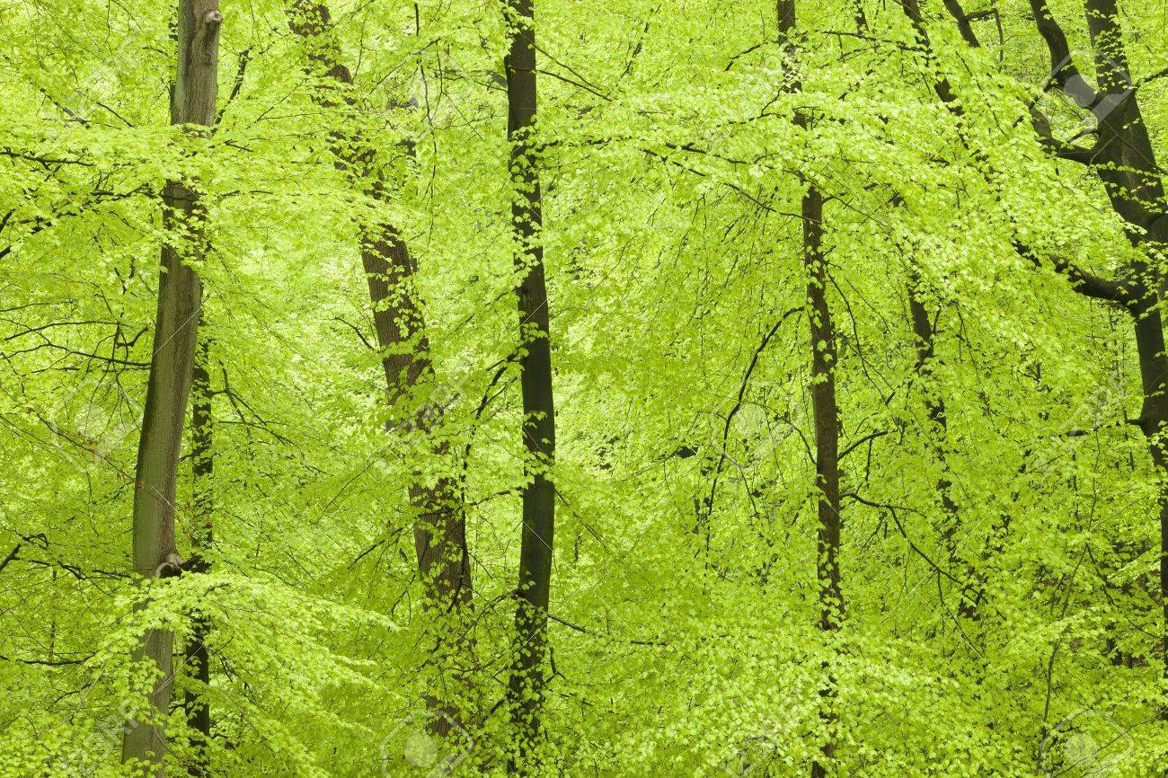 Fresh green forest in spring Standard-Bild - 13874988