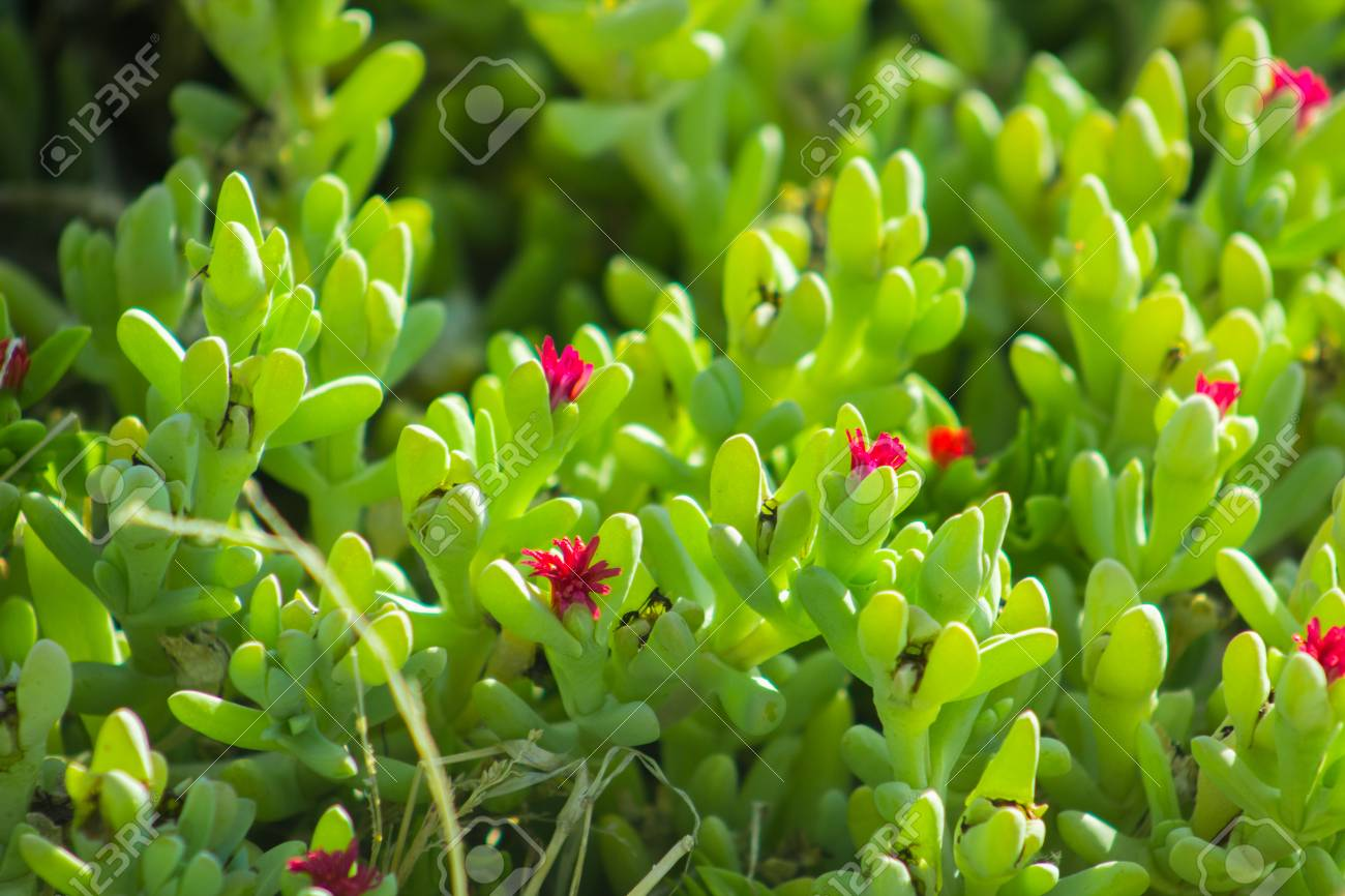 Beautiful Spring Flowers Blooming Under The Sun Different Types