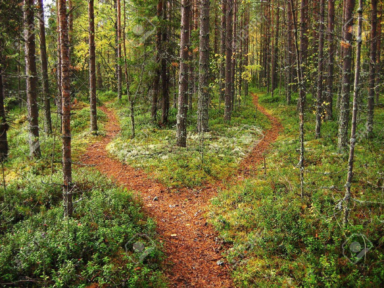 Crossroads in the Karelian forest Stock Photo - 2390107